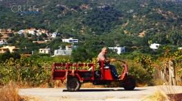 Kreta-Car_a061