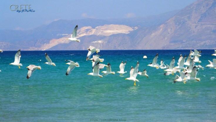 Kreta_Almyros_074
